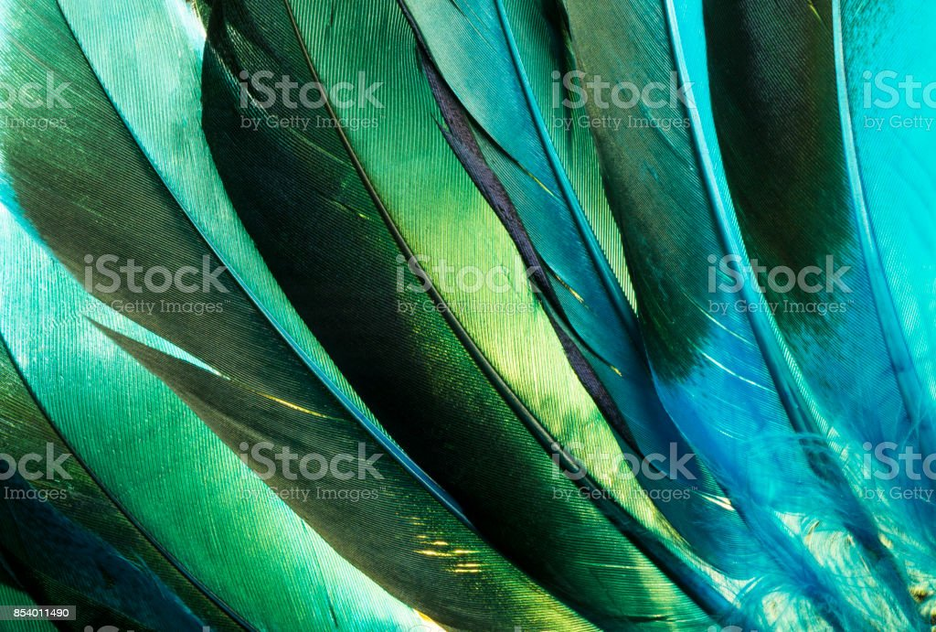 Turquoise Native American Indian Feathers Detail. stock photo