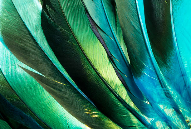 turquoise native american indian feathers detail. - piume colorate foto e immagini stock