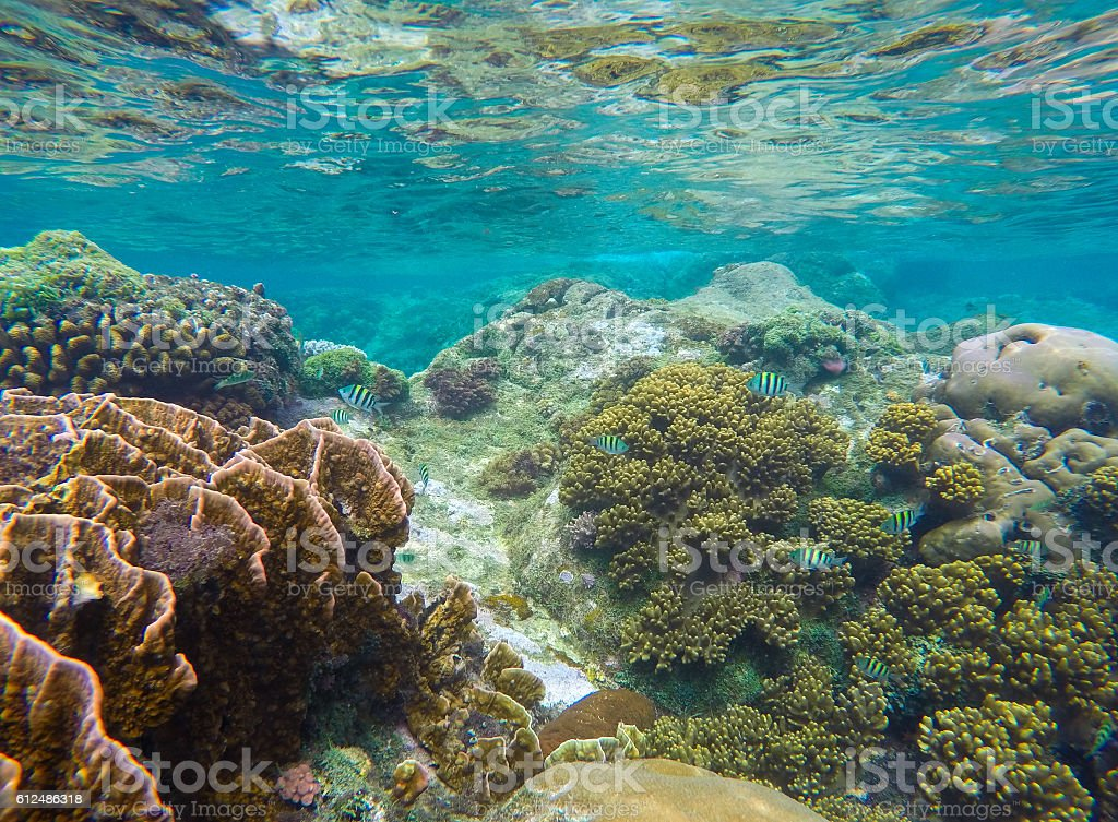 Turquoise sea water and sea life view stock photo