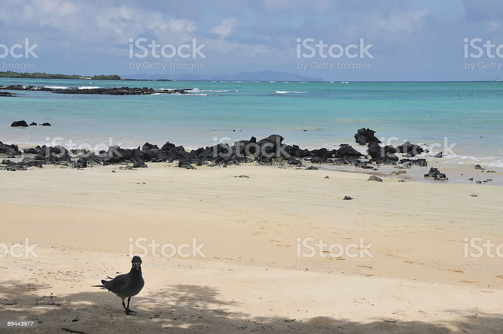 Turquoise Water at a Tropical Beach royalty-free stock photo