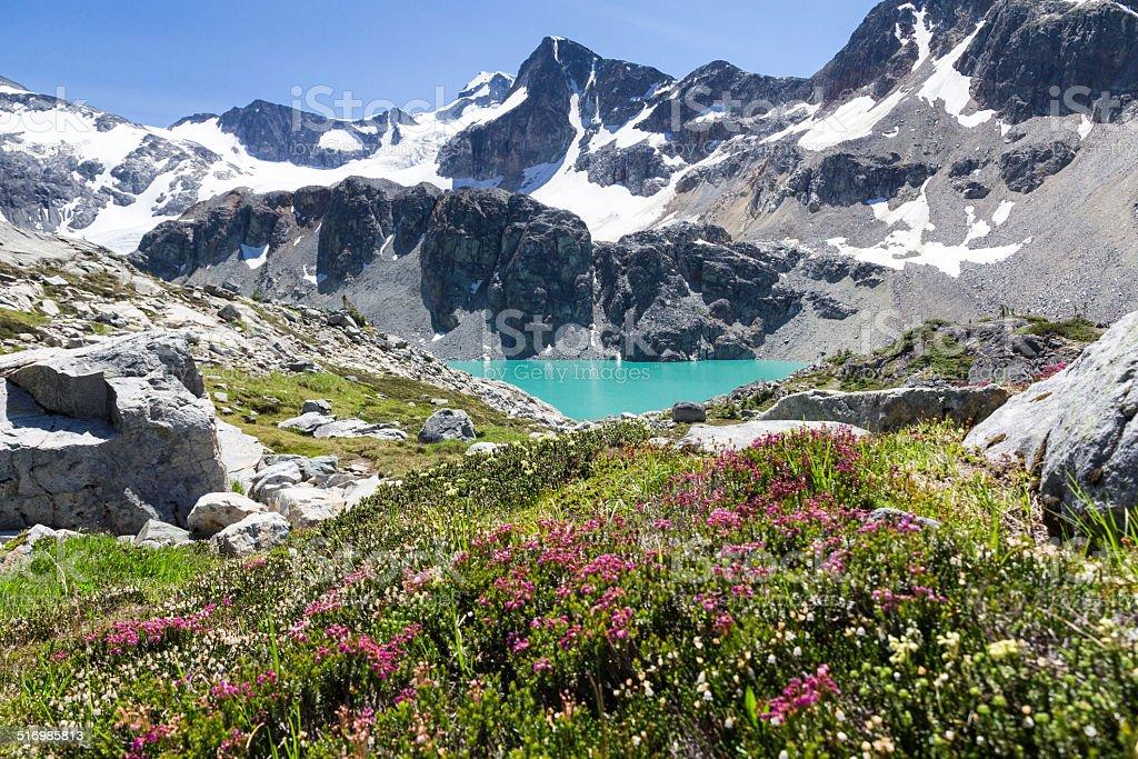 Turquoise Wedgemount Lake, Wedge Mountain and Alpine flowers, Whistler, BC stock photo