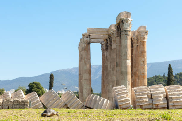 Turtle and Colums of temple of Olympian Zeus stock photo