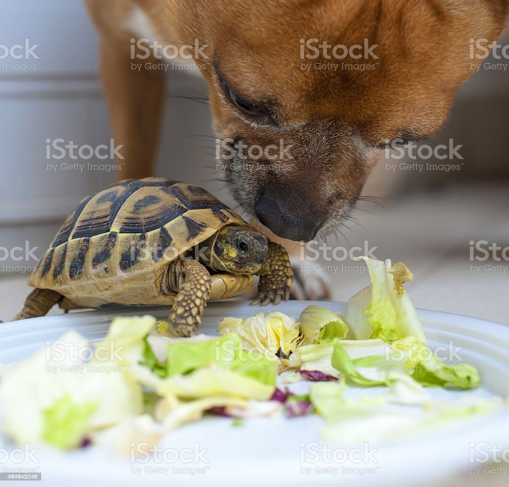Turtle and Dog - Royalty-free 2015 Stock Photo