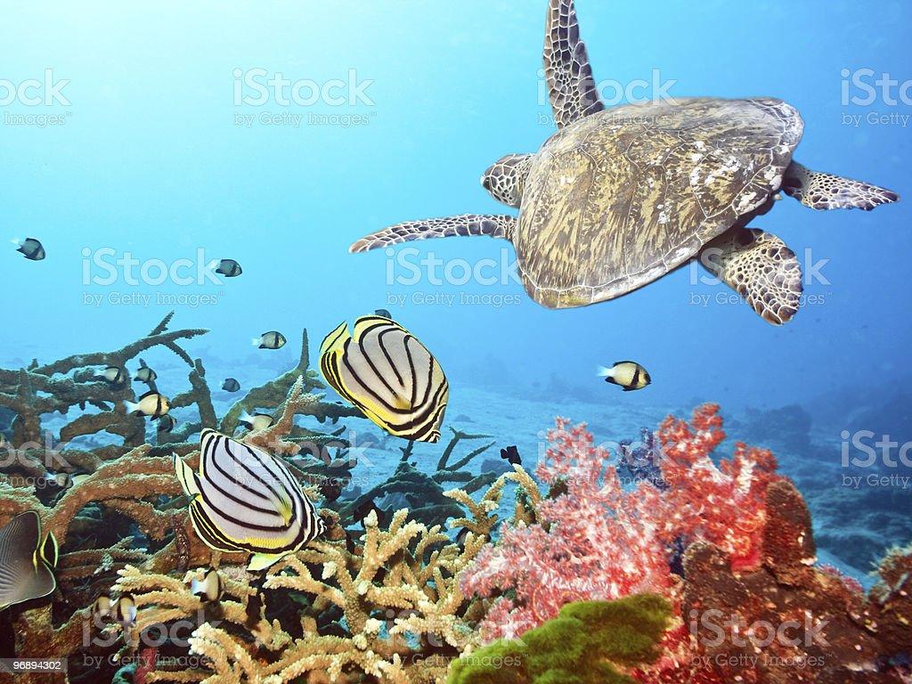 Schildkröten und Fisch – Foto