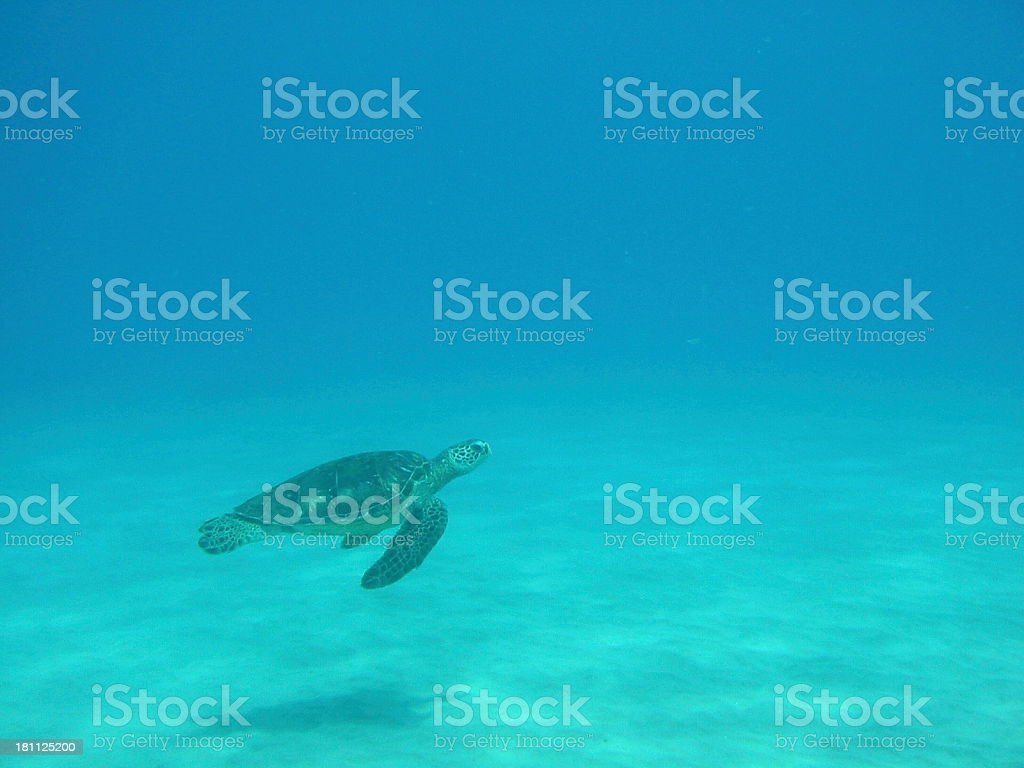 Turtle and Shadow royalty-free stock photo