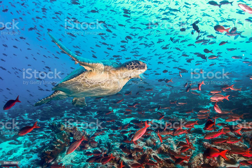 Turtle and tons of fish stock photo