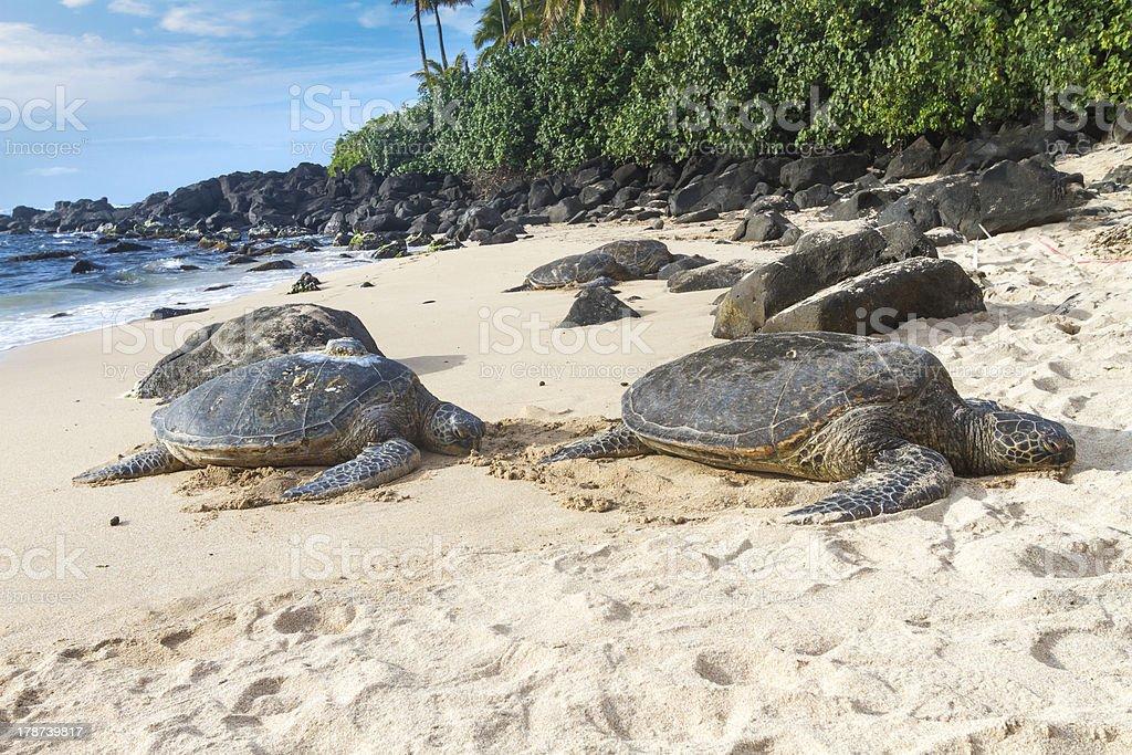 Turtle Beach  Oahu Hawaii royalty-free stock photo