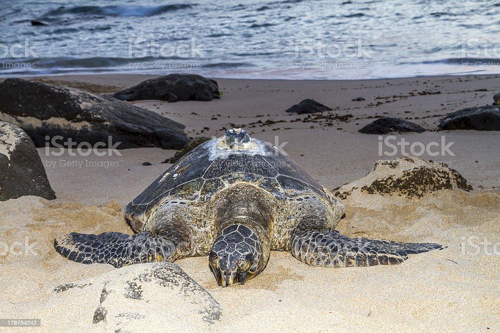 Turtle Beach sunset, Oahu, Hawaii royalty-free stock photo