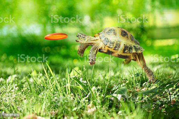 Turtle catches the frisbee picture id178781925?b=1&k=6&m=178781925&s=612x612&h=t8yvnqmjxucsd37isvsmanlleh24qqpfe7dwfos8nfu=