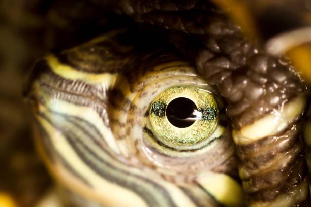 Turtle close up stock photo