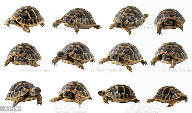 Turtle collection picture id184901764?b=1&k=6&m=184901764&s=612x612&h= pywjtck1ypgrecmujy4x921jl5hosro hl8m c  w4=