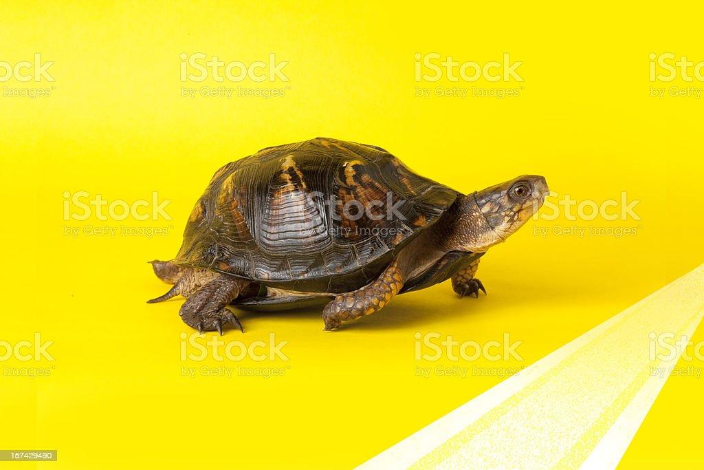 Turtle Crossing der Ziellinie – Foto