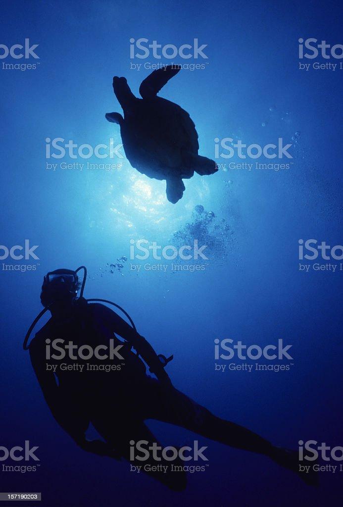 Turtle Dance royalty-free stock photo