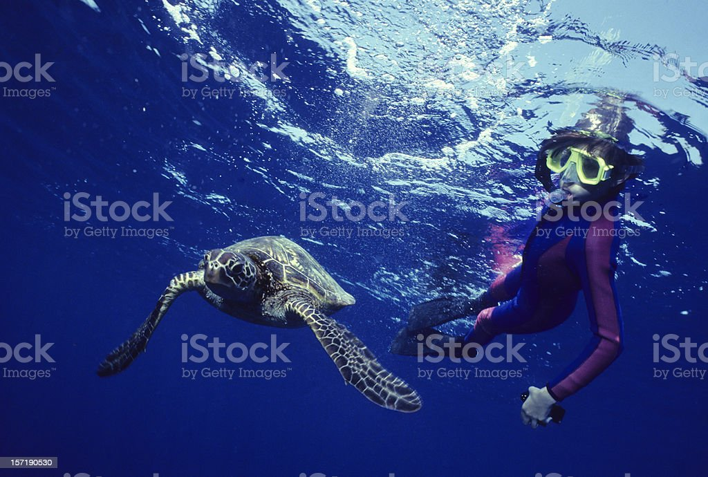 Turtle Dance royalty-free stock photo