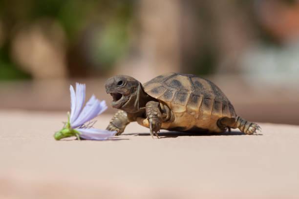 Turtle eat flower stock photo