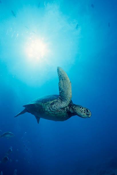 Turtle Flug – Foto