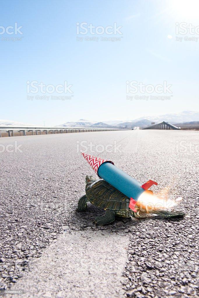 Schildkröten immer bereit zum take off – Foto