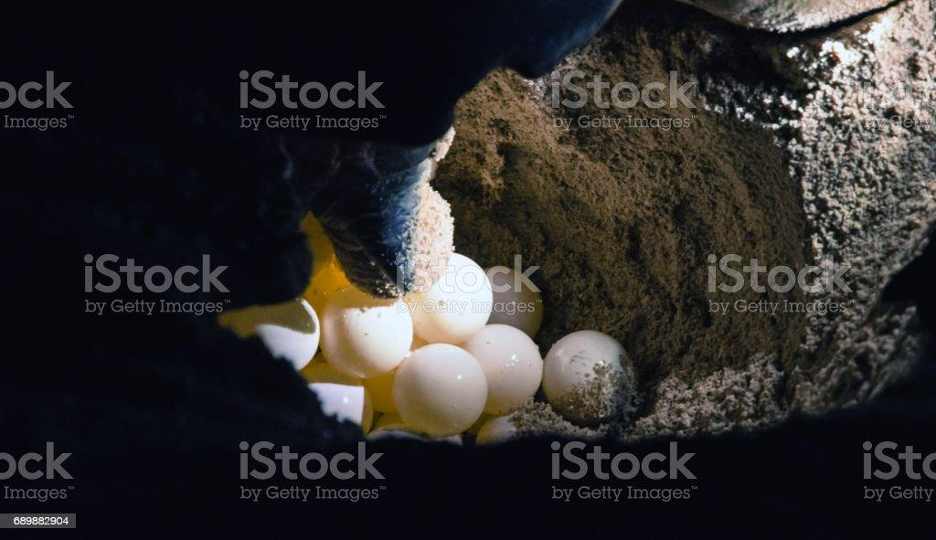 Turtle hatchery on the Selingan island stock photo
