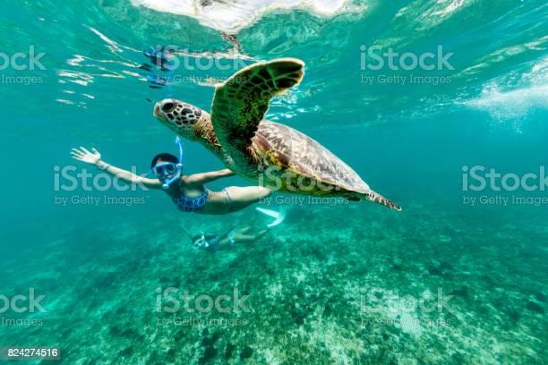 Turtle having fun picture id824274516?b=1&k=6&m=824274516&s=612x612&h=y6yxb4gbyb8qzdhyqjk8ubfteipuoobmuccnux llhs=