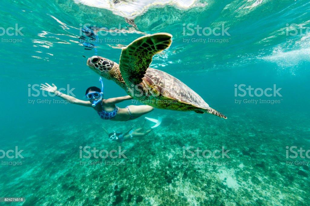 Turtle having fun stock photo