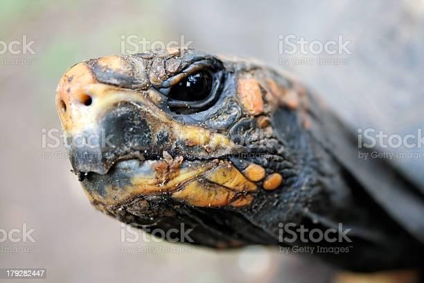 Turtle head closeup picture id179282447?b=1&k=6&m=179282447&s=612x612&h=lac 80sns56si0bi56 wztaglbad96xlmq7eqbvaodc=