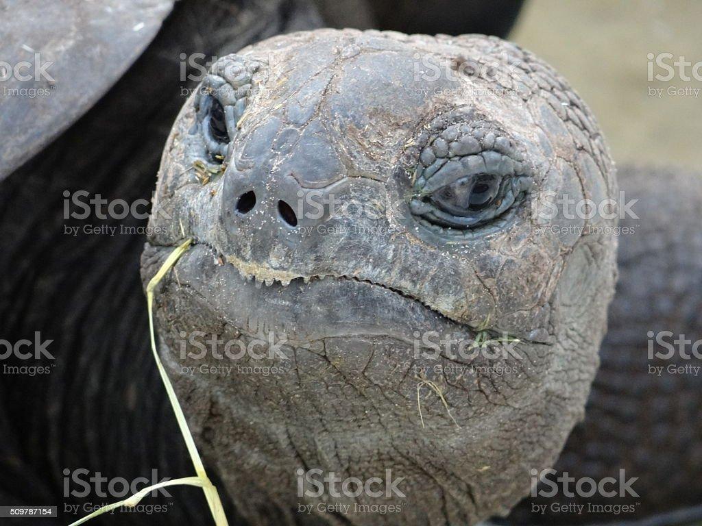 Turtle Head stock photo