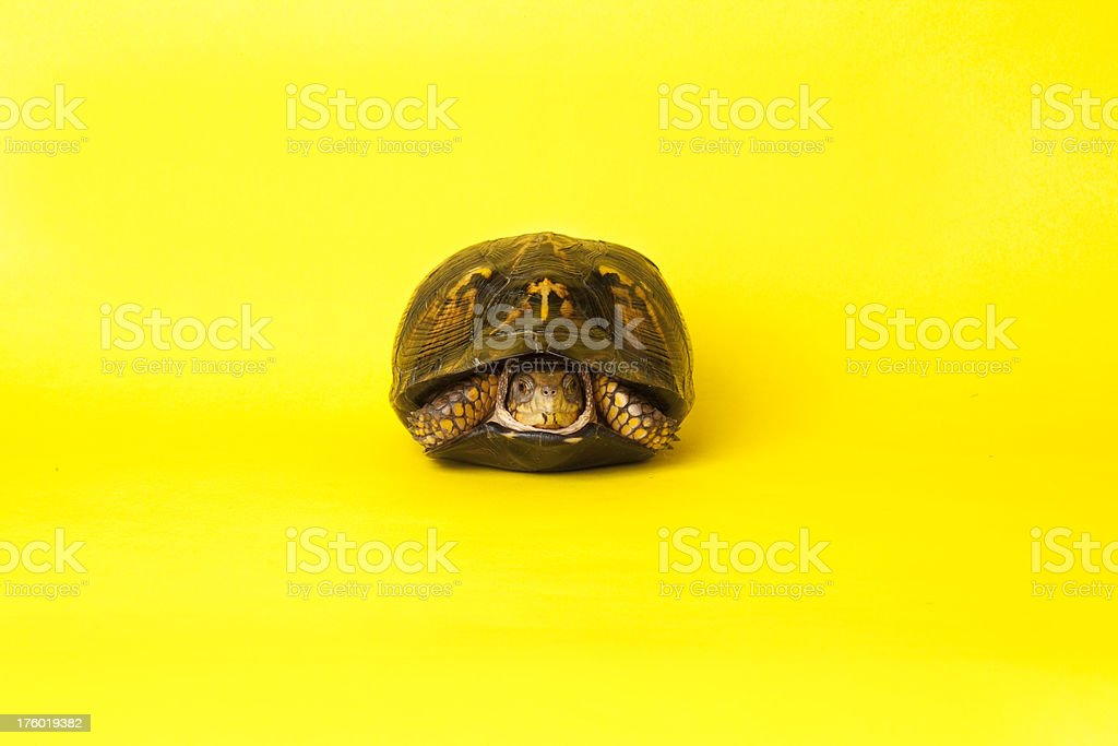 Turtle Hiding in his Shell stock photo