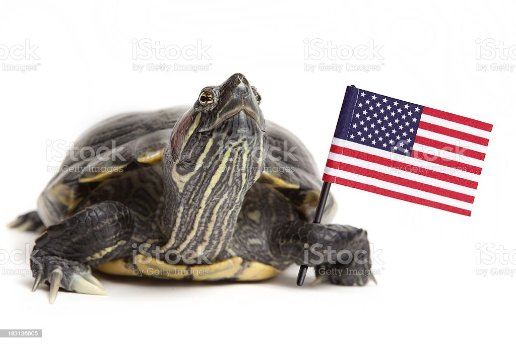 Turtle Holding American Flag stock photo