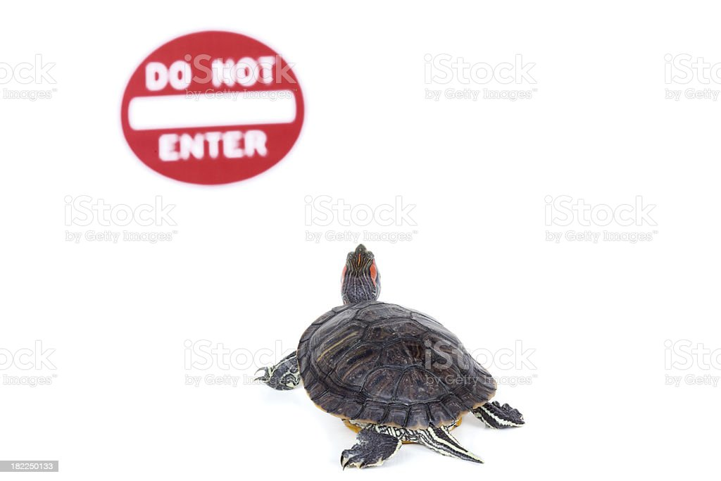 Turtle in front of 'do not enter' sign stock photo