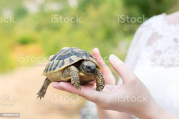 Turtle in hand on palm picture id490683340?b=1&k=6&m=490683340&s=612x612&h=y6ooudwpwkd ch0z6k4kowbzrn1onawet0eij lth5k=