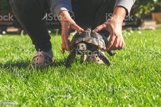 Turtle in the garden pet gras daisy hands woman holding turtle picture id1012548636?b=1&k=6&m=1012548636&s=612x612&h=zrjfuwd4rosy0rvx9tw4kf7kivm qjgc1qx8ogs81s0=