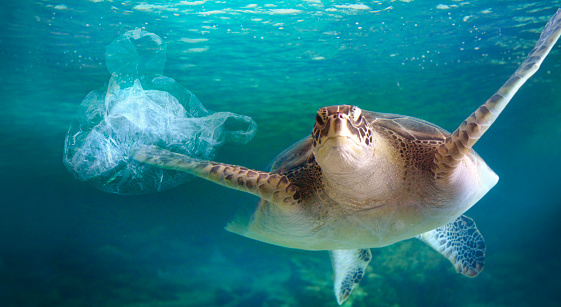 Turtle in the polluted sea with floating plastic bag