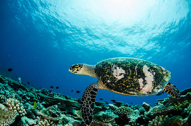 Turtle in Tropical Water stock photo