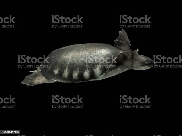 Turtle isolated background picture id658535436?b=1&k=6&m=658535436&s=612x612&h=slnrymicogj9ehnyjfluyiwnxsjxuchf2ce dp ro04=