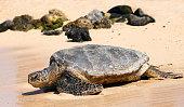 Turtle on a beach