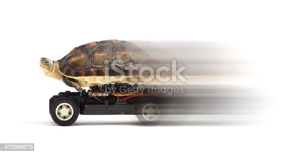 Turtle on a toy car in a speed over white background.