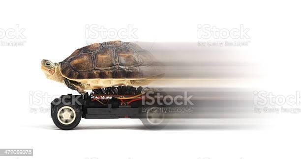 Turtle on a toy car picture id472069075?b=1&k=6&m=472069075&s=612x612&h=kqgfwbliw0kenxm9e2lt3au6ixvisw5iqxv206t6id0=