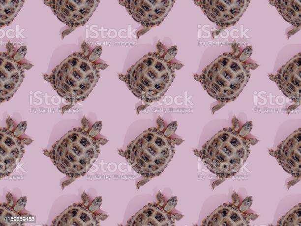 Turtle on pink background picture id1159859453?b=1&k=6&m=1159859453&s=612x612&h=d6gtov2hituxyrmnnlvesgxz1pvfxibhsmoreqaj89s=