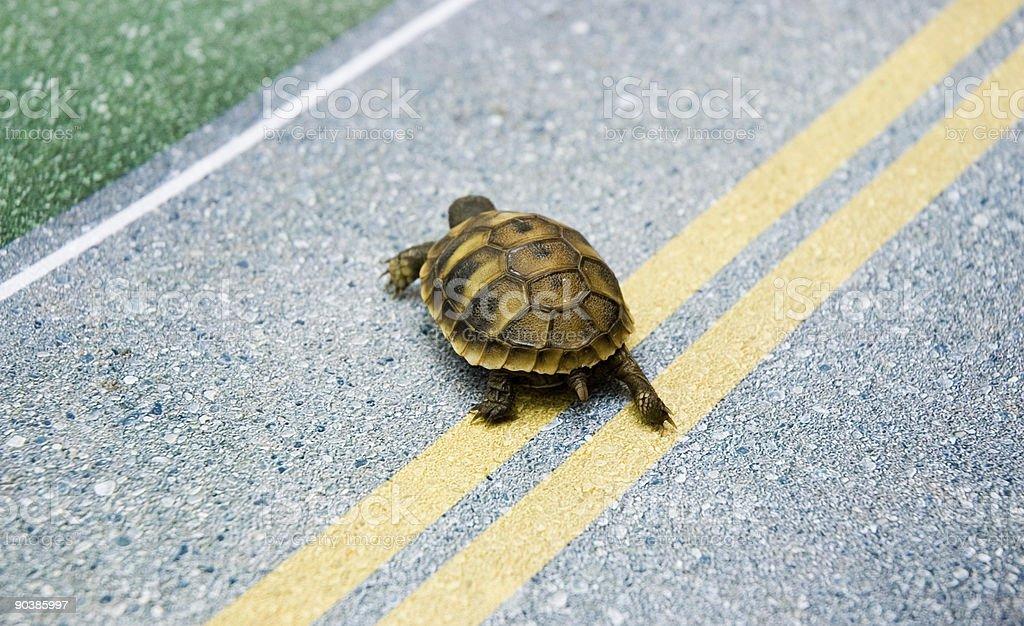 Turtle on street stock photo