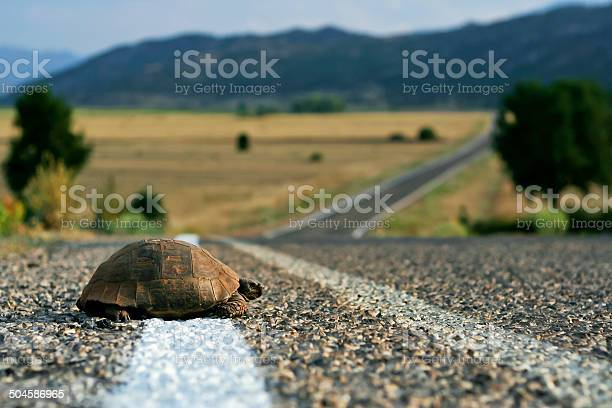 Turtle on the road picture id504586965?b=1&k=6&m=504586965&s=612x612&h=rqa4tpdtvra27qgehpv yyamwzpm6yag9lcexxhltk4=