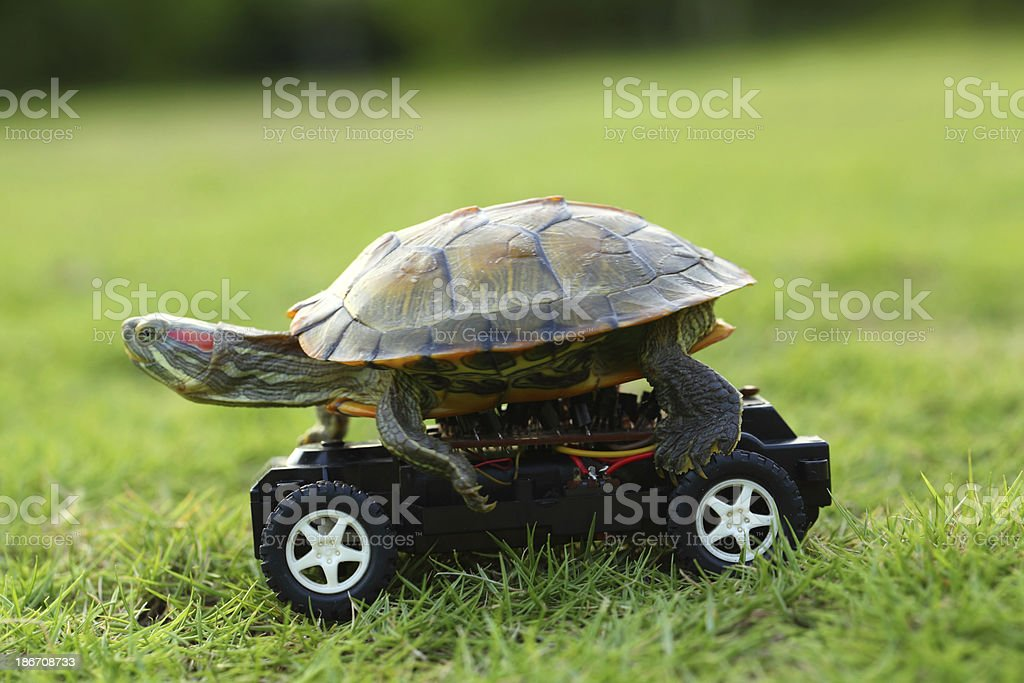 Turtle on Toy Car stock photo