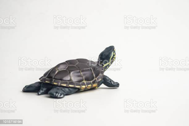 Turtle on white background picture id1015716194?b=1&k=6&m=1015716194&s=612x612&h=qbn5ngl3zy1ytz7a89lsnd71alubnwph0gumtmoukwm=