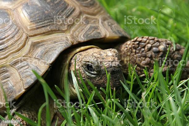 Turtle picture id146892531?b=1&k=6&m=146892531&s=612x612&h=bbqpwrnpol56clbb l qfswhs0cerpar2xvijwcy5vi=