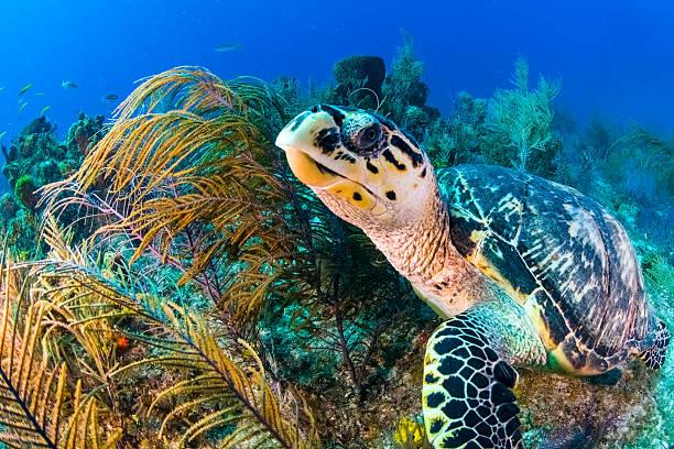 Vada a caccia di tartarughe - foto stock