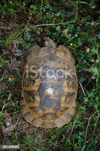 Turtle in the nature