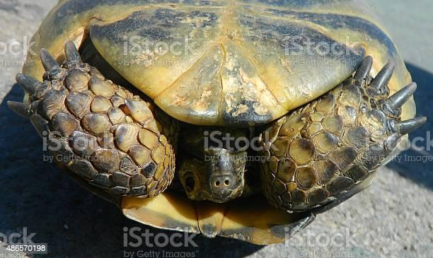 Turtle picture id486570198?b=1&k=6&m=486570198&s=612x612&h=88hhasdu 3jyh1iez9gfz0r  ztpzvoaweqyrsaocsi=