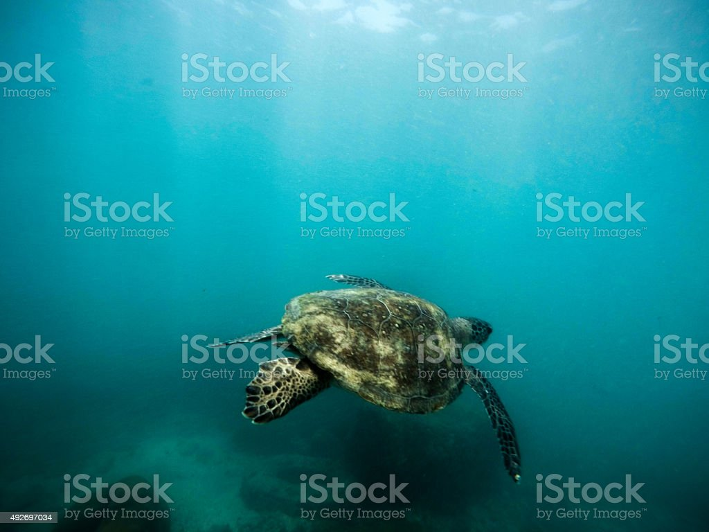 Tartaruga - foto de acervo