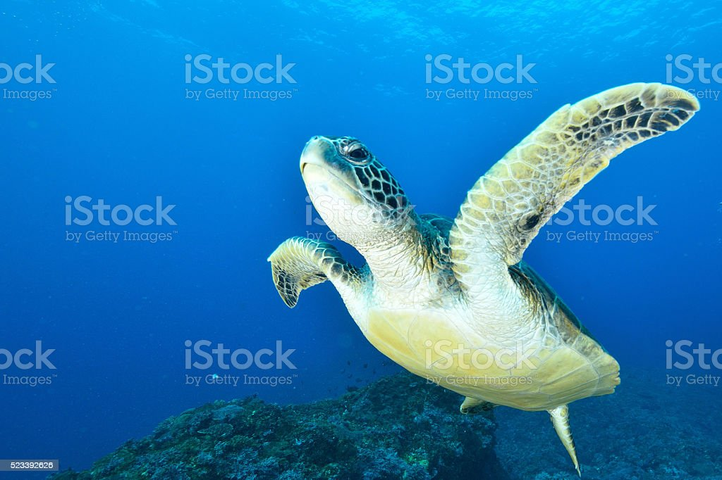 Turtle stock photo