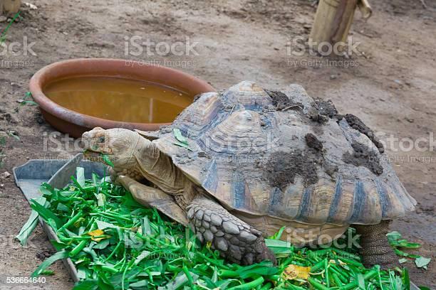 Turtle picture id536664640?b=1&k=6&m=536664640&s=612x612&h=dzi01nafjt 71lfrnrx9hxsix6lzbil7r6xsozv1wtg=