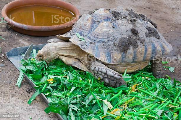Turtle picture id536664682?b=1&k=6&m=536664682&s=612x612&h=wvs8xcuugahvla z73obvxxcodey5z w7k5mqsdopbc=